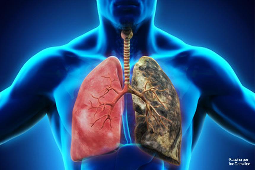 Claves para limpiar y desintoxicar los pulmones de la nicotina
